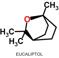 Eucaliptol_Art