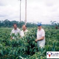 Sr José Azambuja (ao centro), da QUINARÍ, em uma plantação de Pimenta Longa no Estado do Acre em 1997.