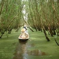 Floresta vietnamita de cajeput