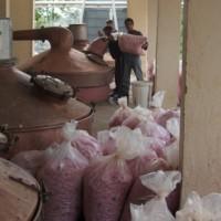 Extração de óleo essencial de rosas por arraste de vapor