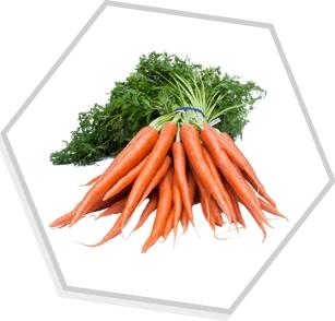 Óleo Essencial de Sementes de Cenoura