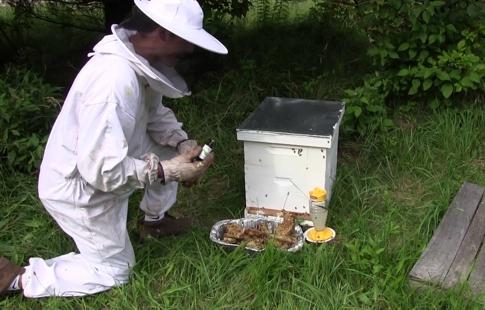 abelhascapimlimao03
