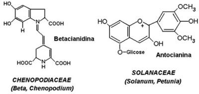 Metabolismo Secundário das Plantas
