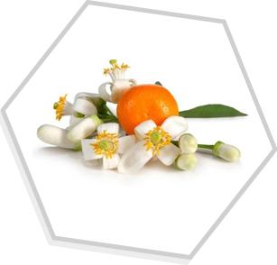Óleo Essencial de Neroli (Flor de Laranjeira)
