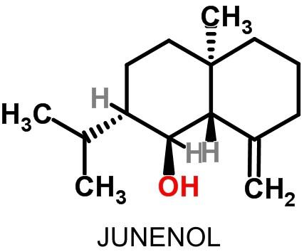 JunenolMol2