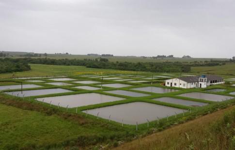 piscicultura01